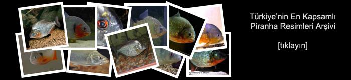 Piranha Resimleri Albümü