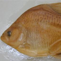 Serrasalmus Hastatus-2