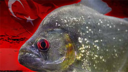 Türkiye Piranhalar Portalı